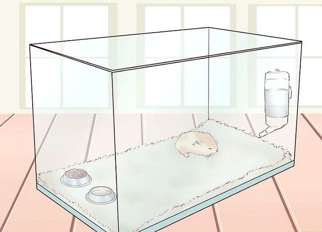 Image cu titlul Treat your Hamster` class=