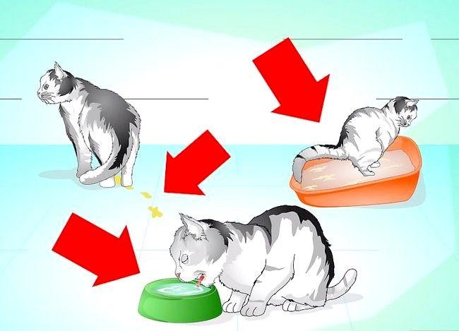 Imagine cu titlul Treat a Cat` class=