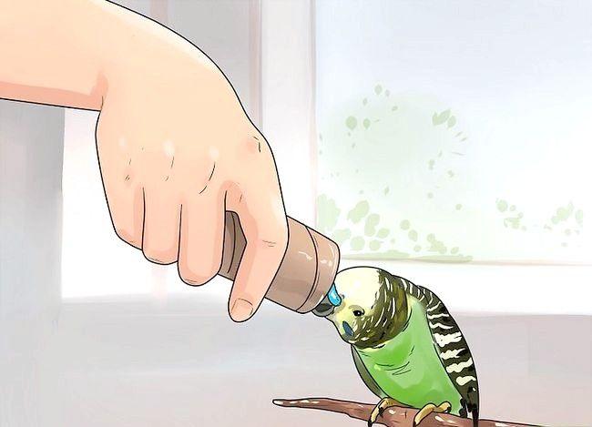 Imaginea intitulată Opriți un Budgie de la mușcătură Pasul 5