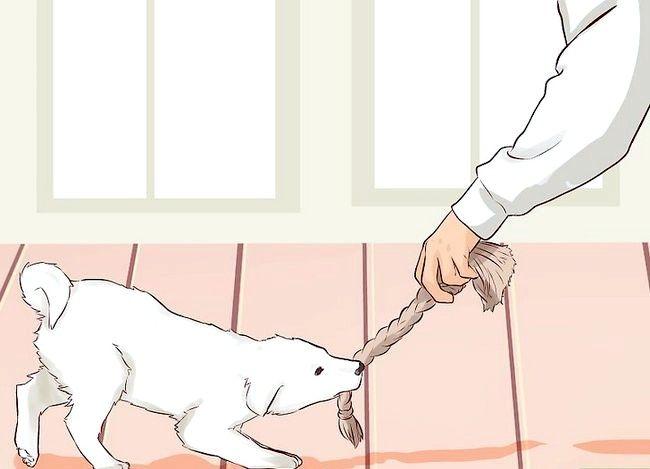 Imagine cu inscripția Train a Puppy Not to Bite Pasul 3