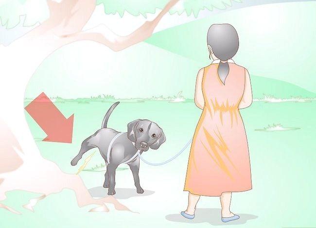 Imaginea intitulată Împiedicarea UTI la câini Pasul 2