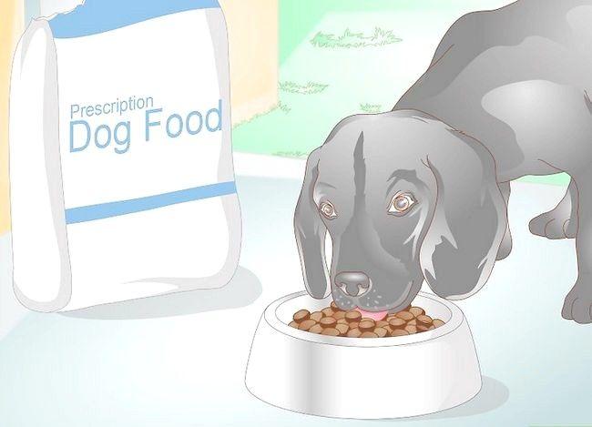 Imaginea intitulată Împiedicarea UTI la câini Pasul 5