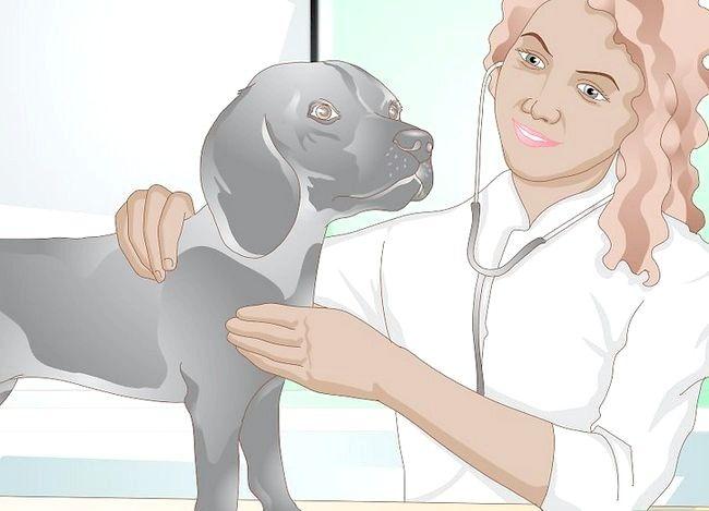 Imaginea intitulată Împiedicarea UTI la câini Pasul 9