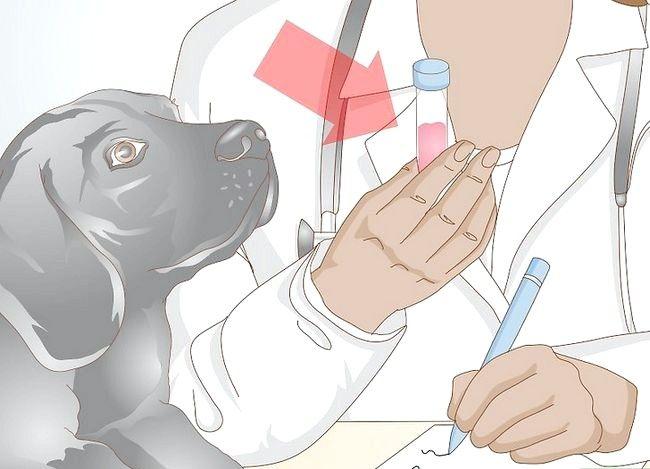 Imaginea intitulată Împiedicarea UTI la câini Pasul 10