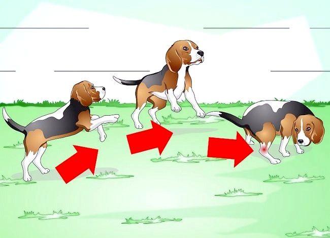 Image cu titlul Tratează o gleznă răsturnată pe un câine Pasul 2