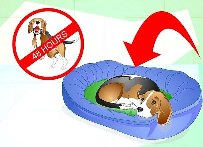 Imagine cu titlul Tratarea unei glezne împrăștiate pe un câine Pasul 6