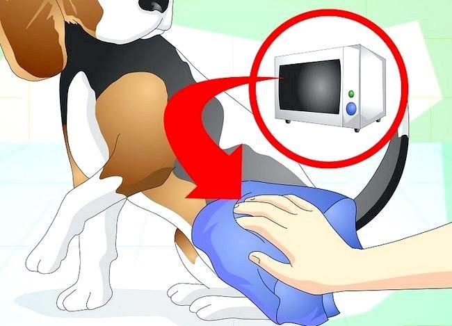 Imaginea intitulată Tratează o gleznă răsturnată pe un câine Pasul 8