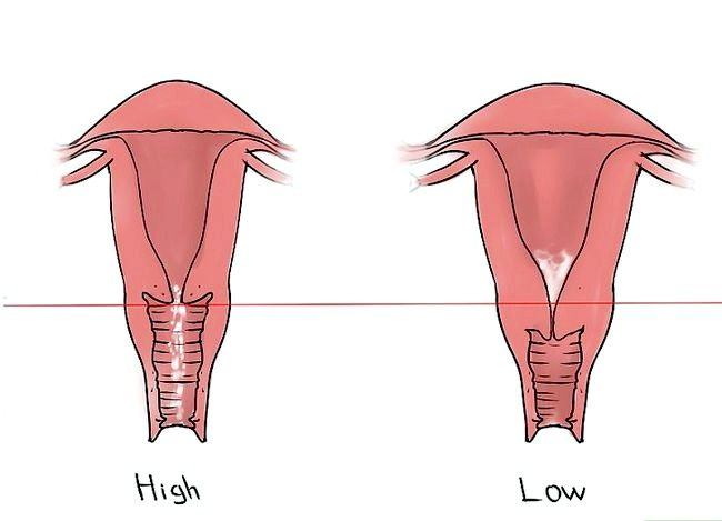 Imagine cu titlul Feel your Cervix Pasul 6