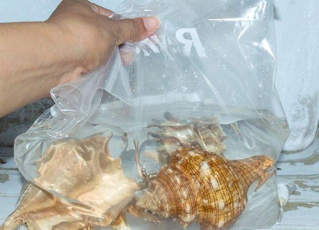 Imaginea intitulată Seashells curată și poloneză Pasul 6