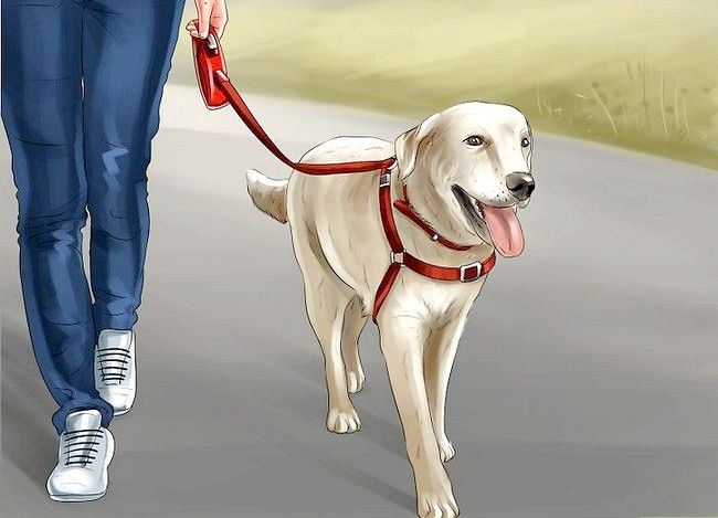 Imaginea intitulată Scapa de miros de urină pentru câini Pasul 11