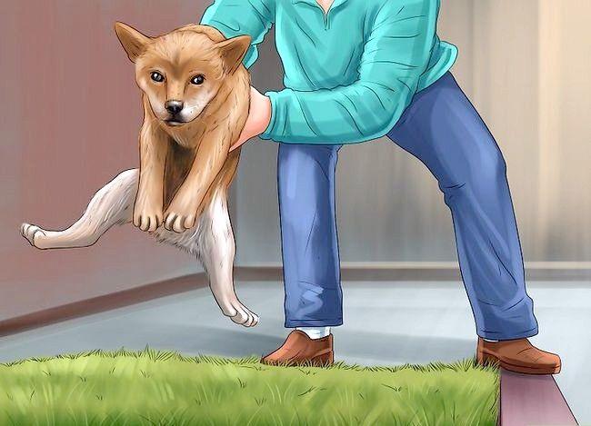Imagine cu titlul Îndepărtați mirosul de urină pentru câini Pasul 12