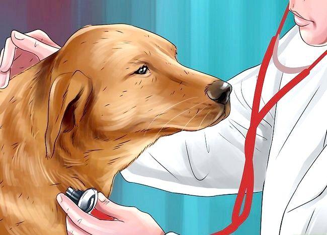 Imagine intitulată Îndepărtați mirosul de urină pentru câini Pasul 13