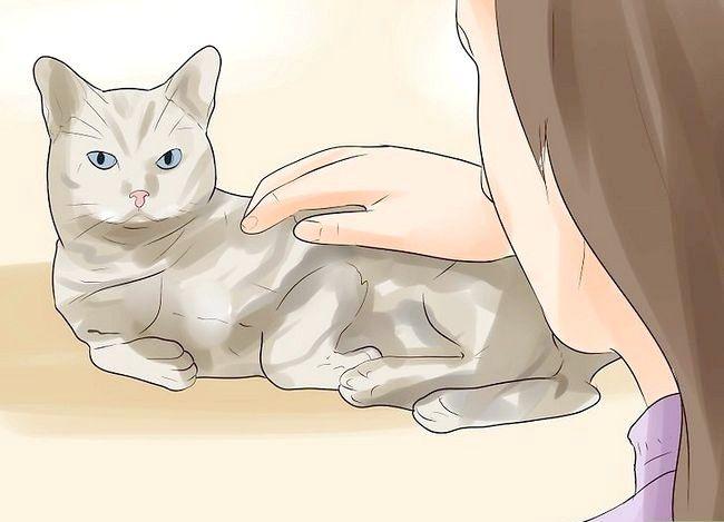 Știind dacă pisica ta moare