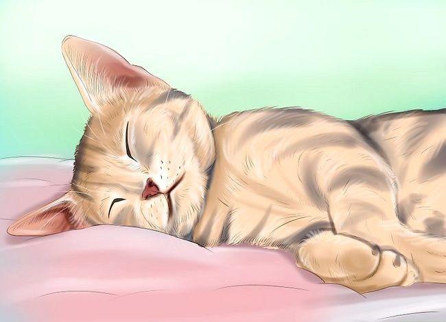 Știți când pisica dumneavoastră este bolnavă