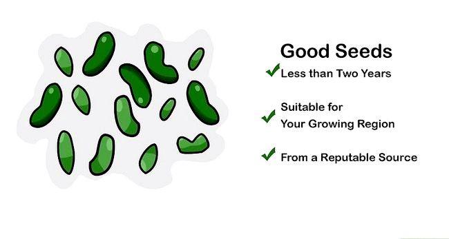 Să germineze germinarea