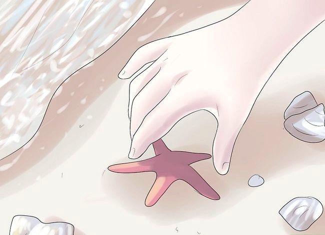Păstrați steaua de mare ca decor