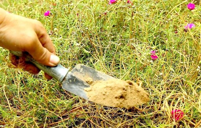 Imaginea intitulă Faceți pietre false cu beton Pasul 17