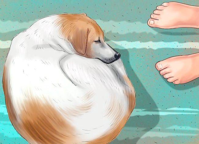 Vezi dacă câinele tău este deprimat