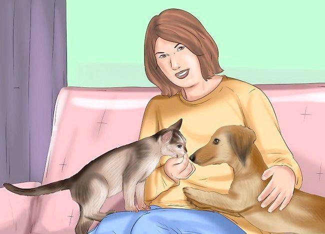 Asigurați-vă că o pisică și un câine îndure unul pe celălalt