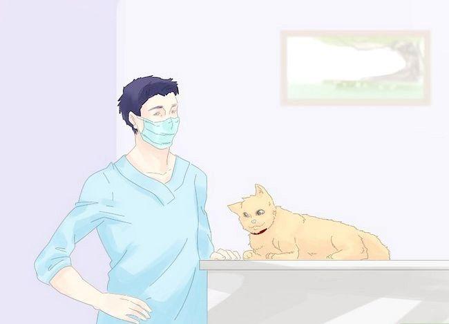 Asigurați-vă că o pisică nu fuge în timpul unei mutare