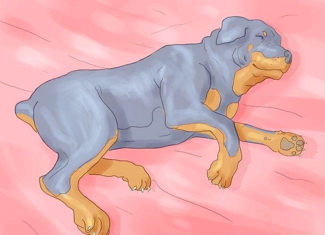 Asigurați-vă că câinele dvs. nu mai dormi în patul dvs.