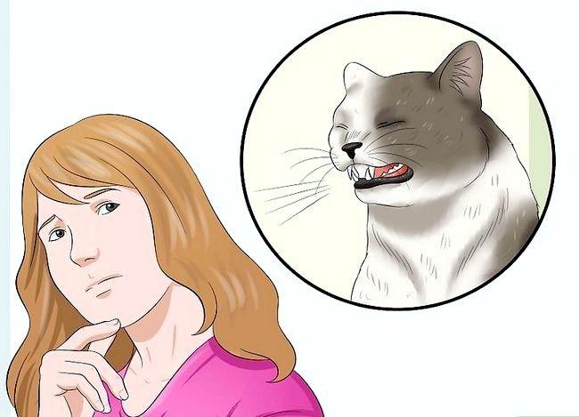 Asigurați-vă că pisica dvs. nu se îndepărtează