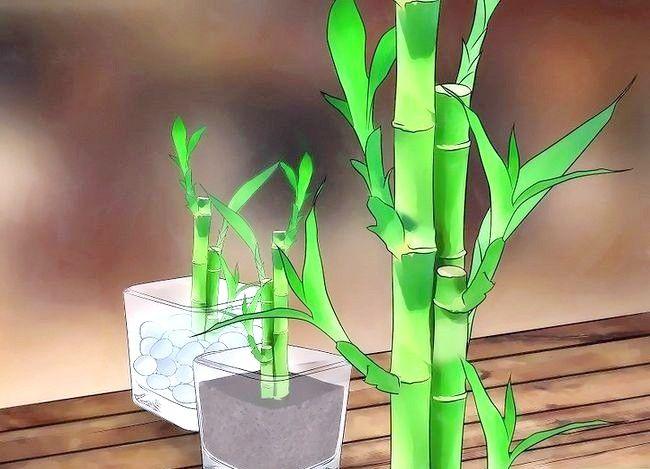 Grija pentru fericirea bambusului
